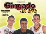 FORRÓ GINGADO NOVO
